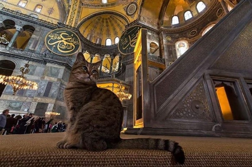 Los gatos de Estambul